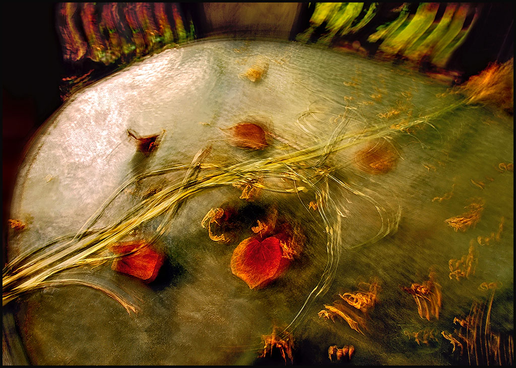 abstract photograph of foliage on an outside table