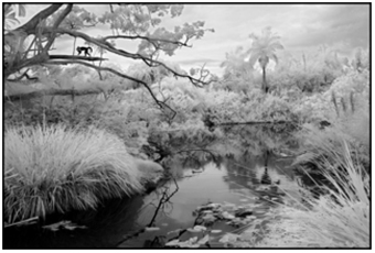 A black and white, tropical, landscape photograph in South Florida