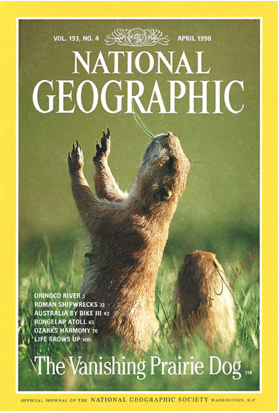 "National Geographic Cover, ""The Vanishing Prairie Dog"" photographed by Raymond Gehman"