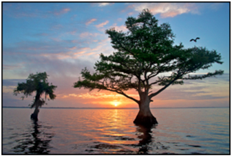 The sun setting between two trees at Blue Cypress Lake, Florida