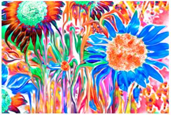 Colorful sunflowers melting