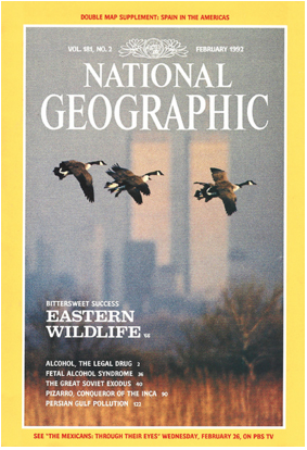 National Geographic Cover with Canadian geese flying in front of the World Trade Center, New York City